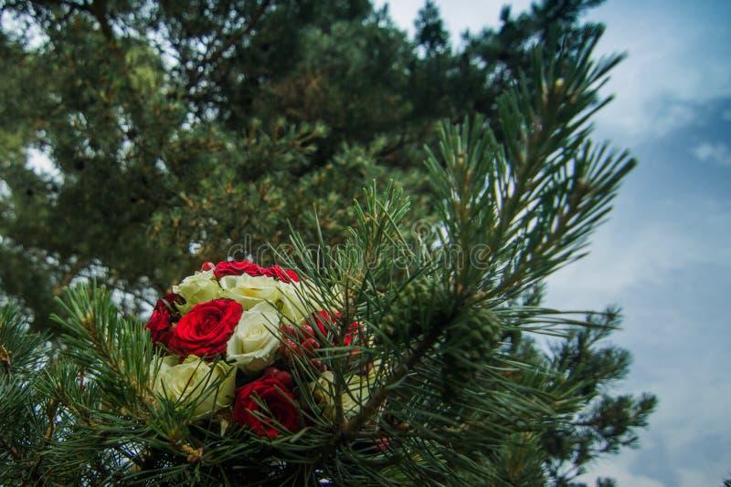 在松木的花束 免版税库存图片