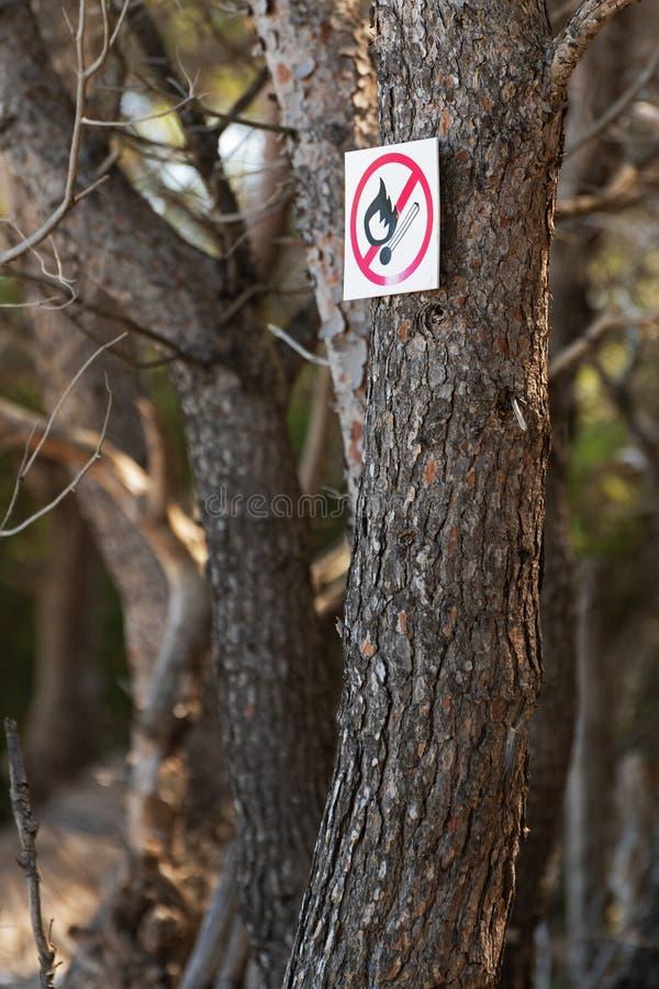 在松树的树干的没有明火标志 免版税库存照片