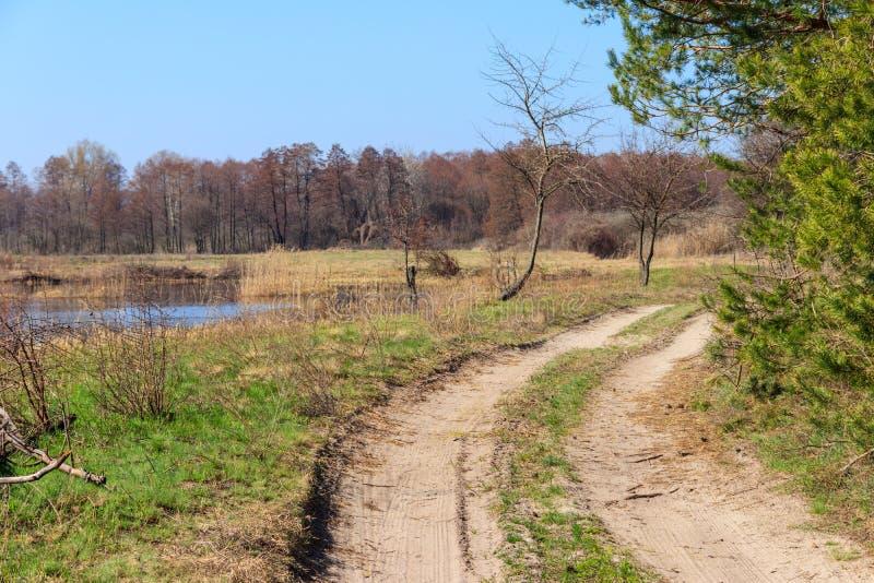 在松树附近的土路在好日子 免版税库存图片