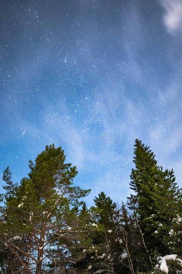 在松树,Gautefall,挪威的开始 免版税库存图片