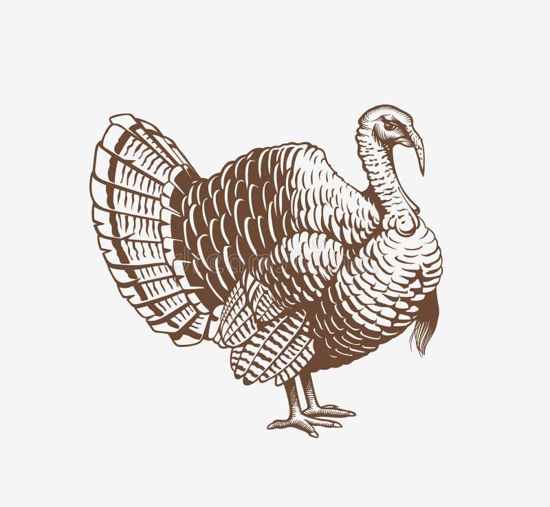 在板刻或木刻样式的土耳其手拉的例证 雄火鸡肉和蛋葡萄酒产物元素 徽章和 向量例证