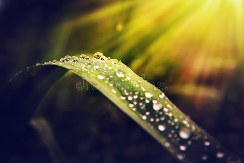 在板料的露水以太阳` s为背景发出光线 图库摄影