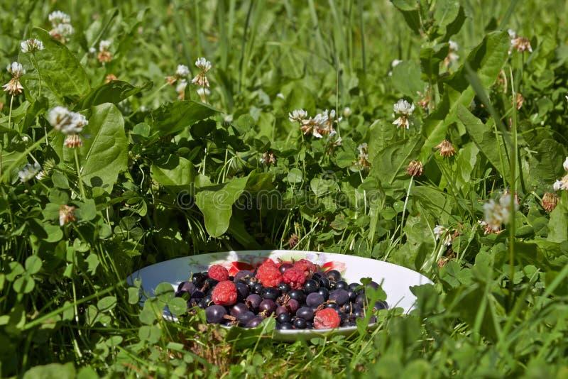 在板材的不同的莓果 图库摄影