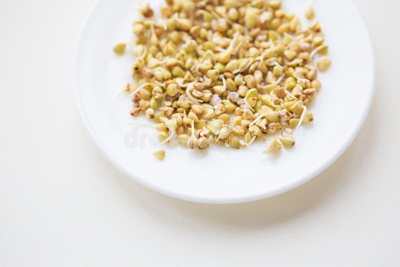在板材,健康食品,健身,体育,饮食的发芽的荞麦五谷 库存照片