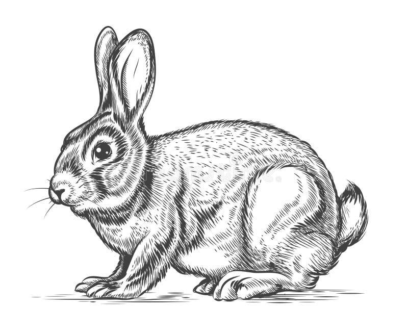 在板刻样式的手拉的传染媒介兔子 库存例证
