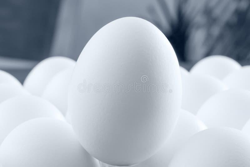 在极端宏观钥匙的卓著的白鸡蛋 免版税库存图片