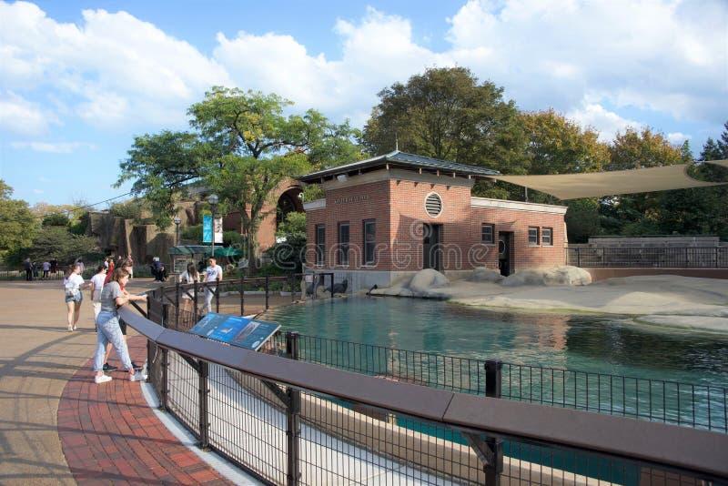 在林肯公园动物园芝加哥,伊利诺伊的海狮水池 库存图片