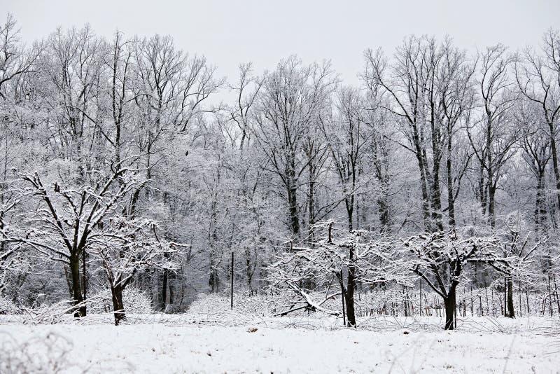 冬天场面在果树园 库存图片