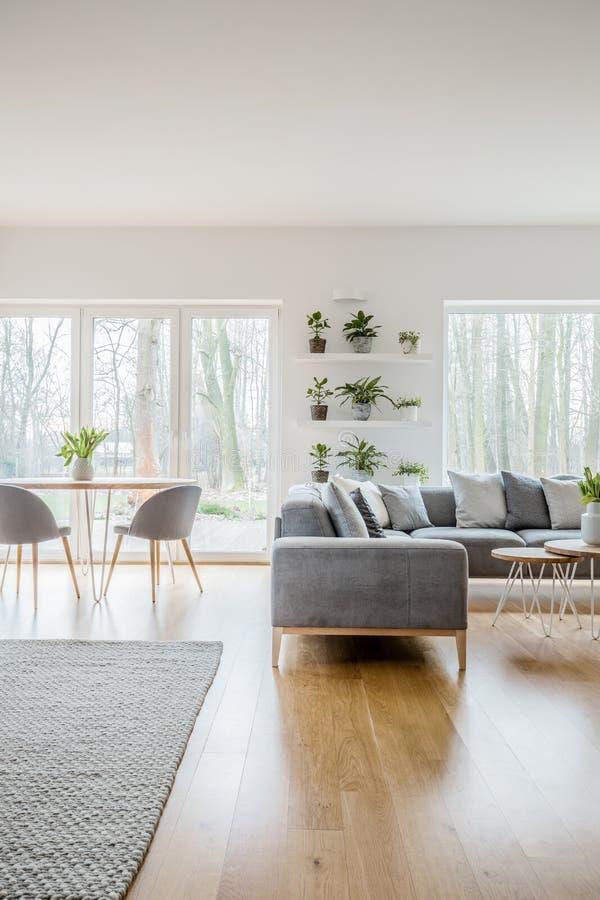 在架子安置的罐的绿色新鲜的植物在与灰色壁角长沙发的白色客厅内部有枕头和明亮的地毯的o 库存照片