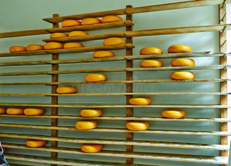 在架子的荷兰干酪在阿纳姆公园7月 免版税库存照片