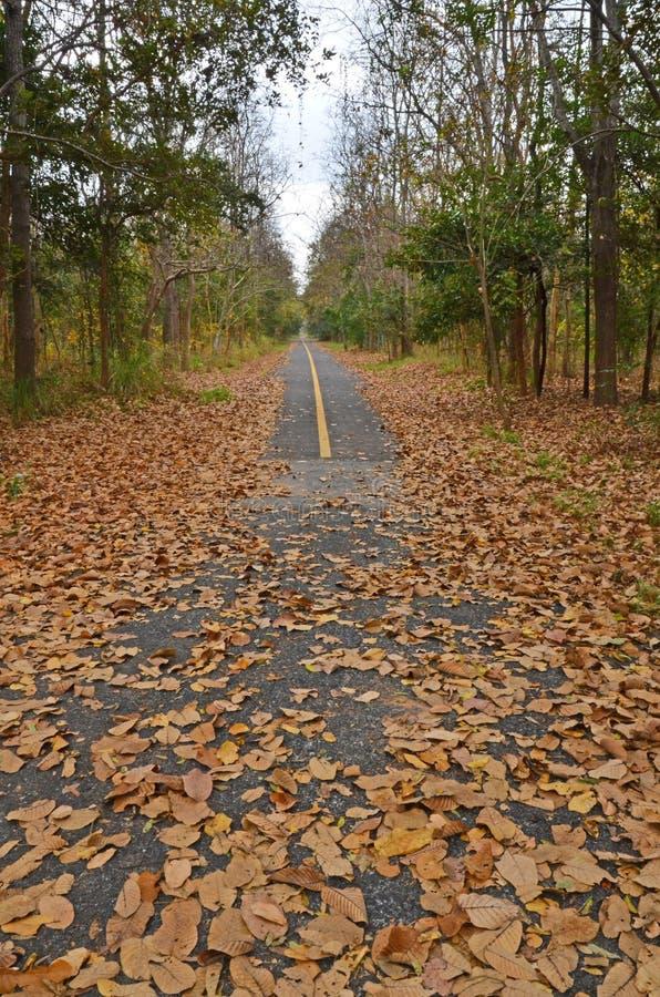 在柏油路的下落的干叶子在森林里 免版税图库摄影