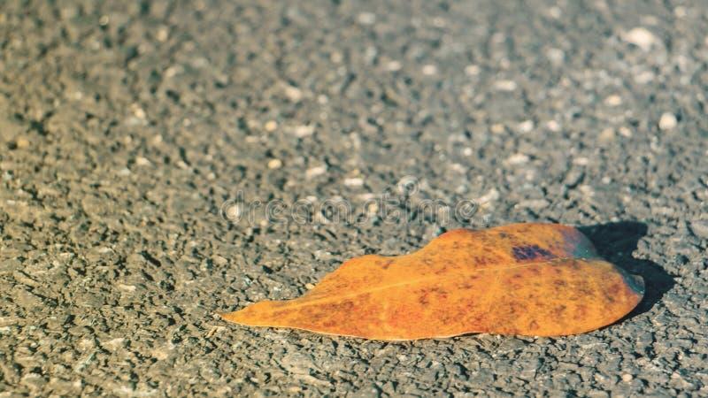 在柏油路的唯一干燥叶子 免版税库存照片