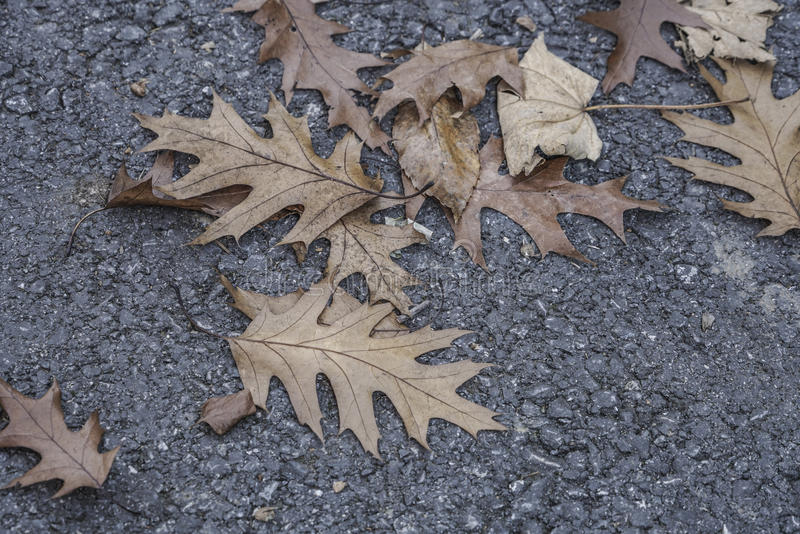 在柏油路的干秋叶 免版税库存照片