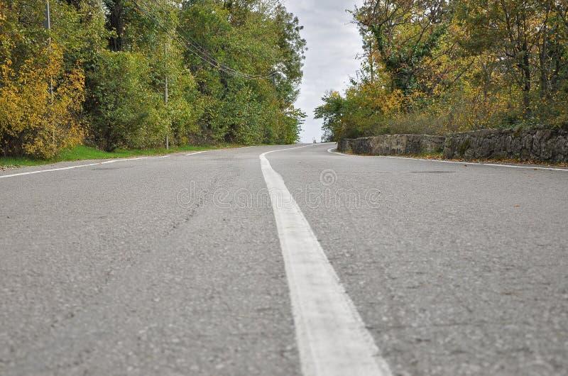 在柏油路的白色划分小条在秋天森林里 库存图片