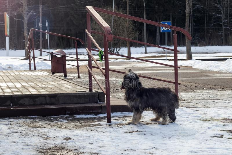 在柏油路的黑蓬松狗在公园 库存照片