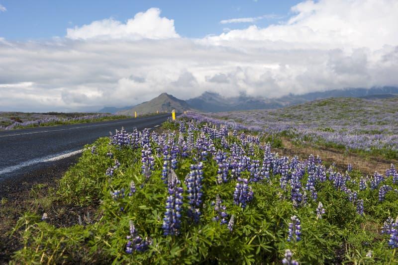 在柏油路附近的凶猛领域,有云彩天空的,冰岛 库存照片