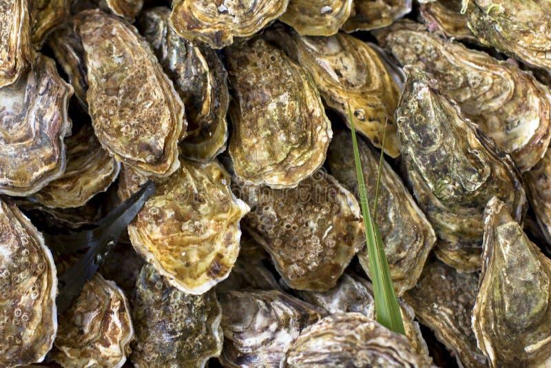 在柜台的牡蛎在市场上的木箱 牡蛎待售在海鲜市场上 免版税库存图片