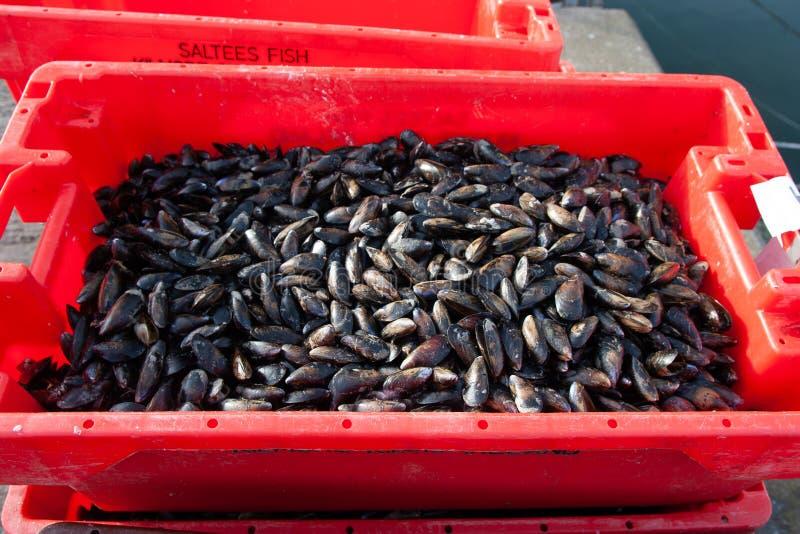 在柜台的牡蛎在市场上的红色箱子 库存图片