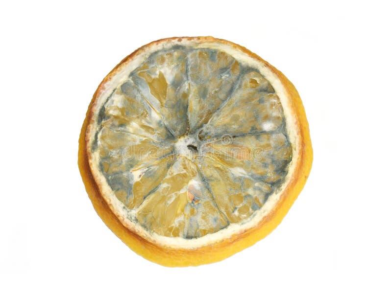 在柠檬切片的模子 免版税库存图片