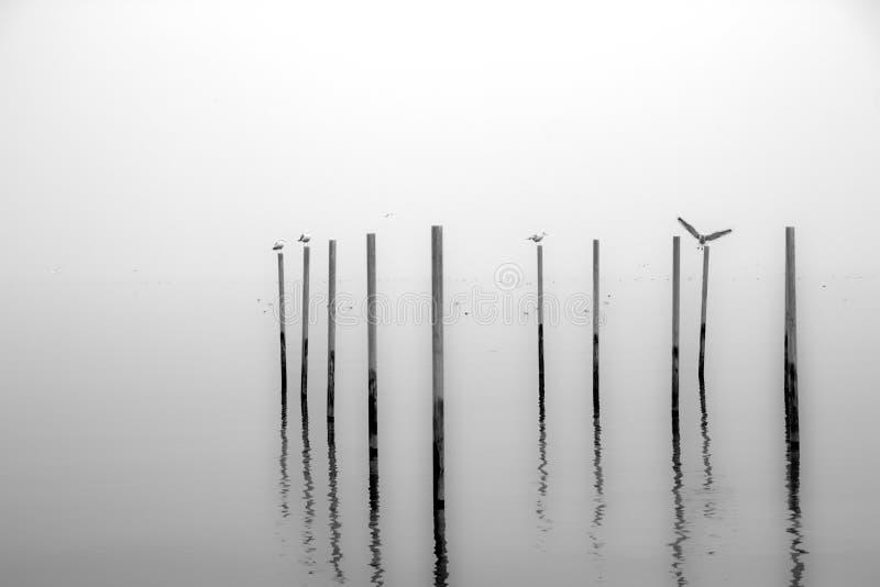 在柱子的鸟身分在雾 库存照片