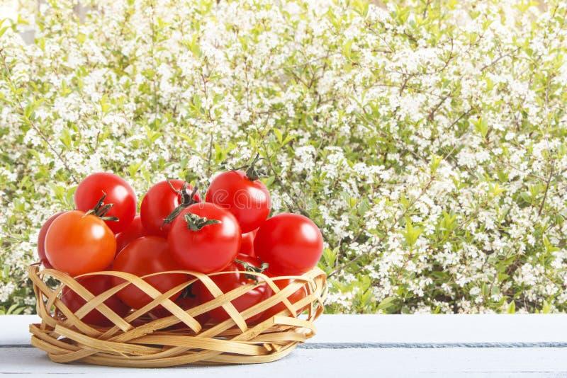 在柳条筐的红色成熟西红柿在室外 与新鲜蔬菜的木桌在樱桃树背景  侧视图 库存照片