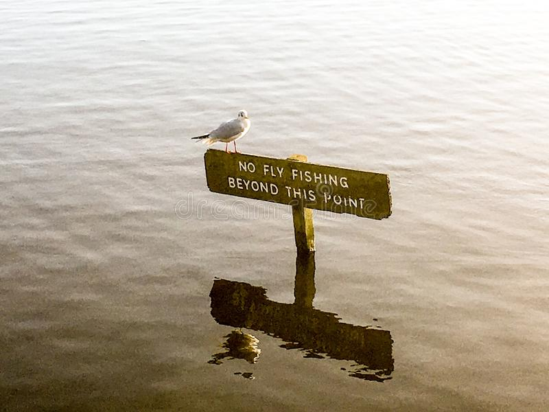 在标志的海鸥 免版税图库摄影