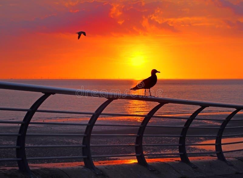 在栏杆栖息的海鸥现出轮廓反对美好的金黄日落在有红色天空的镇静暮色海反射了 免版税库存照片
