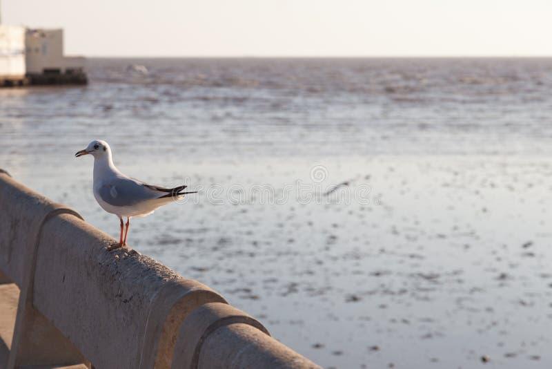 在栏杆栖息的海鸥 免版税库存照片