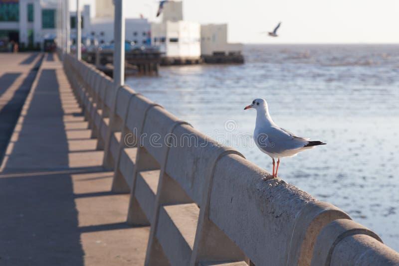 在栏杆栖息的海鸥 免版税库存图片