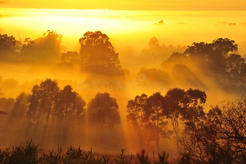 在树上的日出在云彩 免版税库存图片