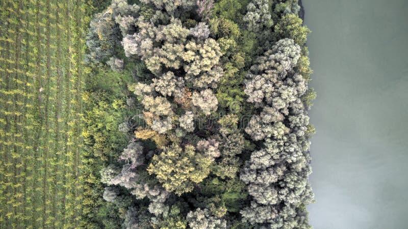 在树上的看法临近河多瑙河 免版税库存照片