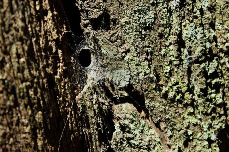 在树上的蜘蛛网 免版税库存照片