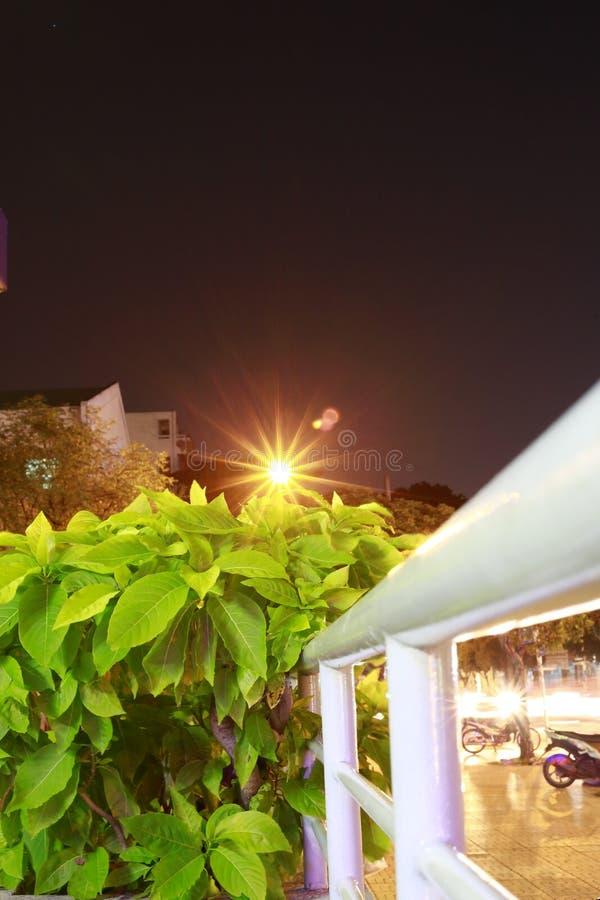 在树上的`太阳` 免版税库存图片