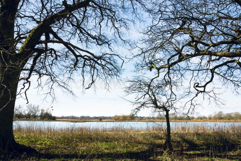 在树下树荫的镇静看法在早期的春天 免版税库存图片