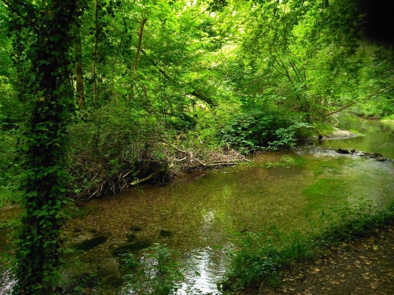 在树下树荫,小河跑它的方式 免版税库存照片