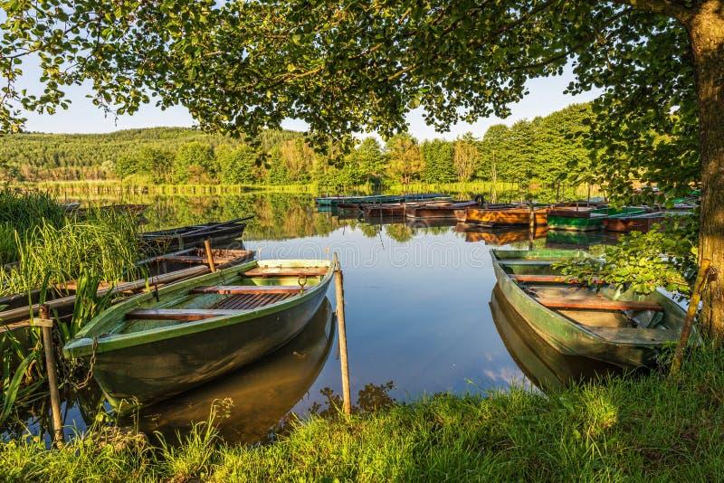在树下,小船在湖的港口 库存图片