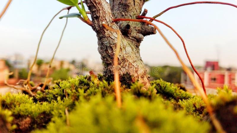 在树下 免版税图库摄影