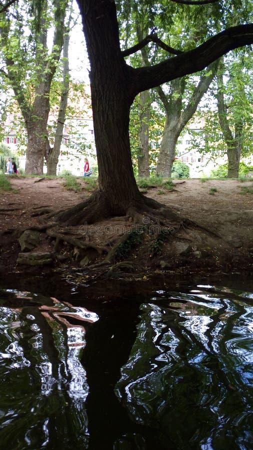 在树下 库存照片