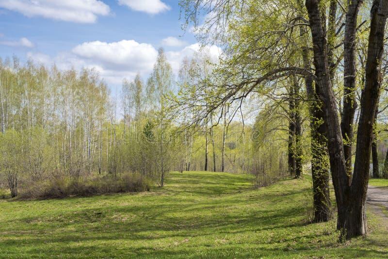 在树丛树的年轻叶子 图库摄影