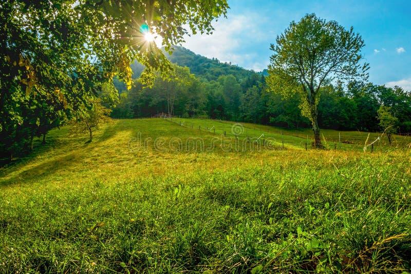 在树中的太阳在一个绿色山草甸 免版税库存照片