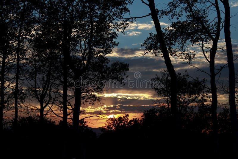 在树中的太阳设置 免版税库存图片