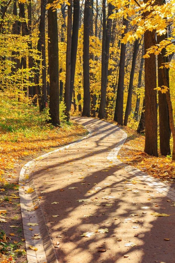 在树中的小径与黄色叶子在公园晴朗的秋天天 免版税库存照片