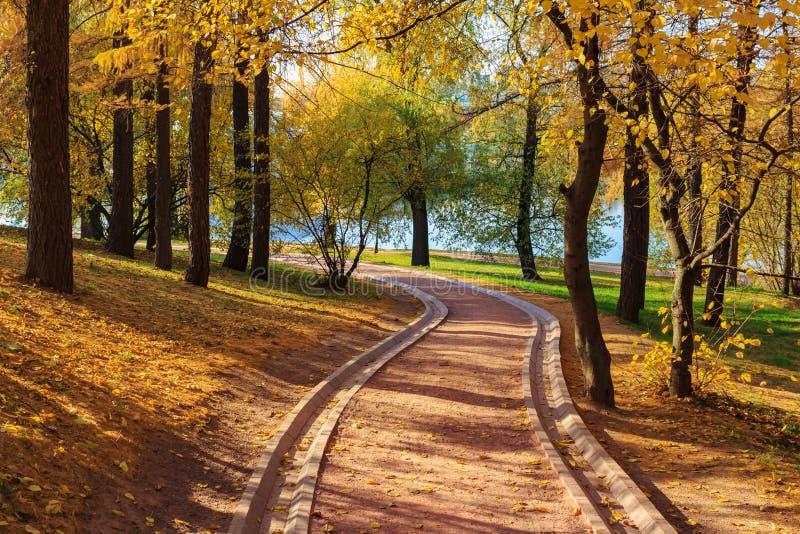 在树中的小径与黄色叶子在池塘背景的公园晴朗的秋天天 库存图片