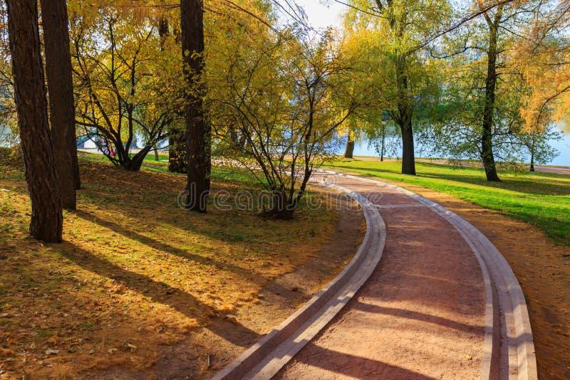 在树中的旅游胡同与黄色叶子在池塘岸的公园晴朗的秋天天 免版税库存照片