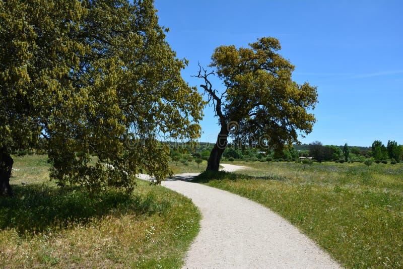在树中的步行 免版税库存图片
