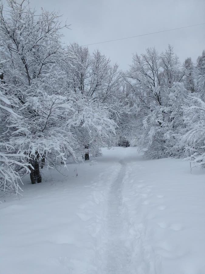 在树中的雪道路 库存照片