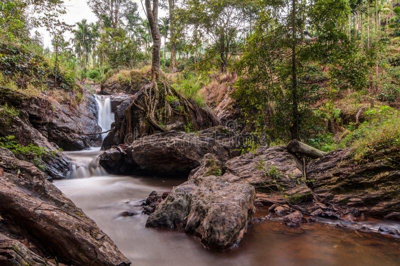 在树中的水小河 免版税库存图片