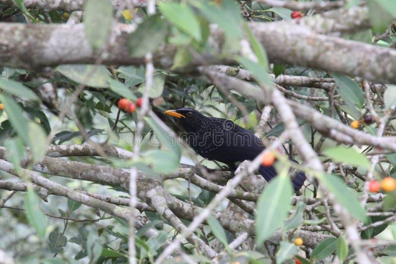 在树中间的一只乌鸦在森林里 免版税库存图片
