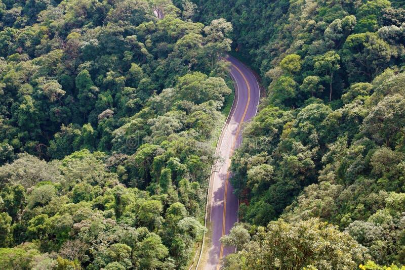 在树之间的街道在从上面森林鸟瞰图,雅拉瓜峰顶,巴西 免版税库存照片
