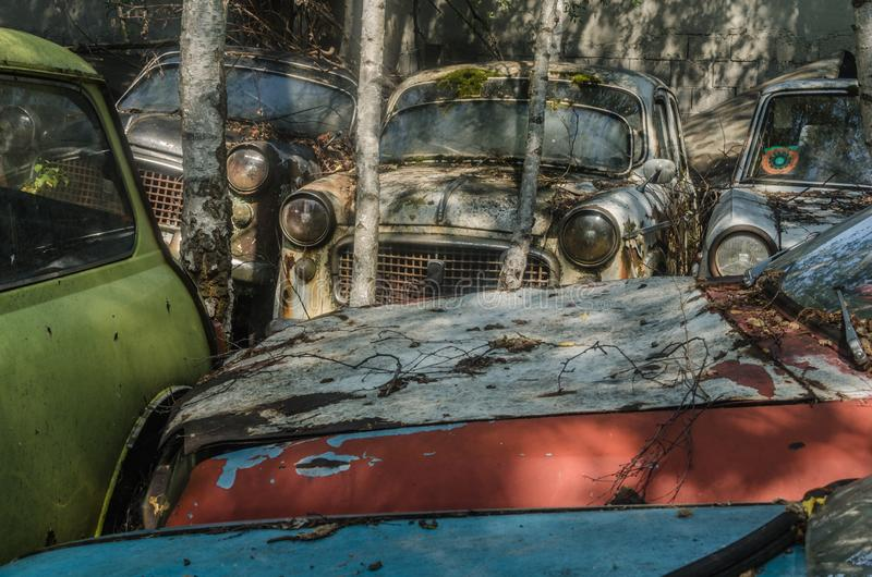 在树之间的许多五颜六色的汽车 免版税库存照片